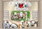 Angol bulldog kennel - The Devil Looks Like Bulldogs